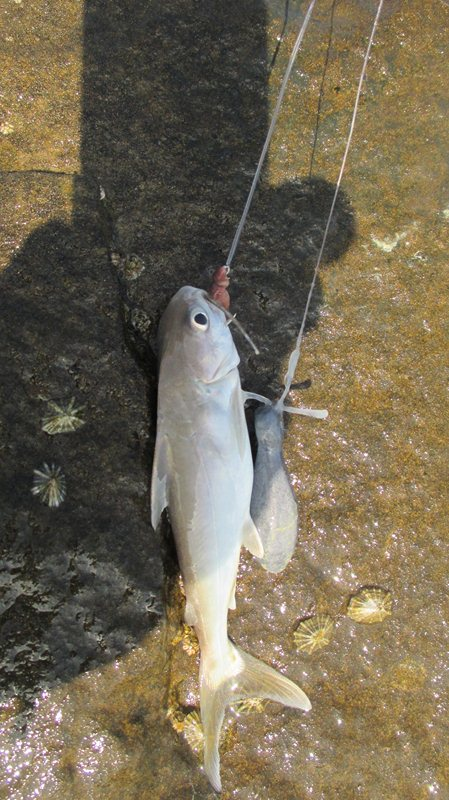 [تصویر:  fishing_boshehr%20%2847%29.JPG]