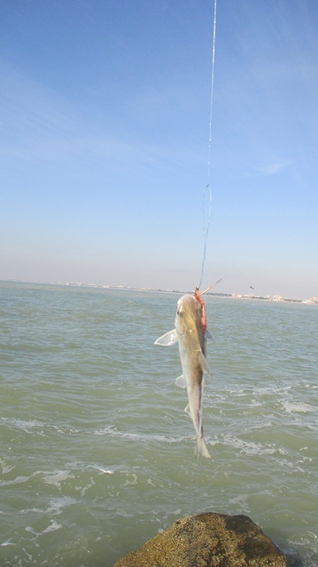 [تصویر:  fishing_boshehr%20%2848%29.JPG]