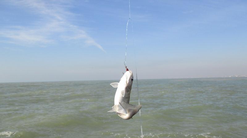 [تصویر:  fishing_boshehr%20%2849%29.JPG]
