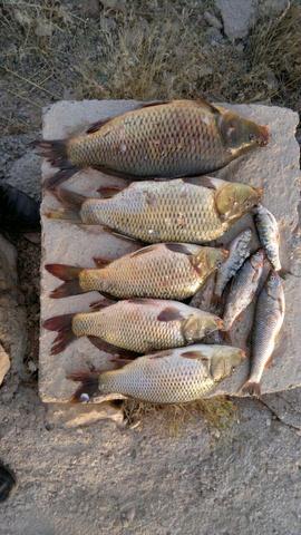 http://esfahanfishing.persiangig.com/kiyvanfishing/4.jpg