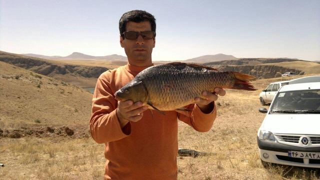 http://esfahanfishing.persiangig.com/kiyvanfishing/8.jpg